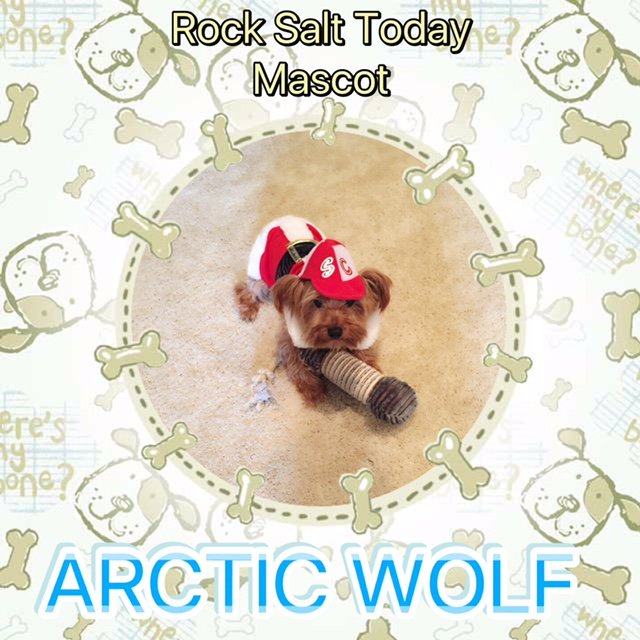 rock salt mascot dog